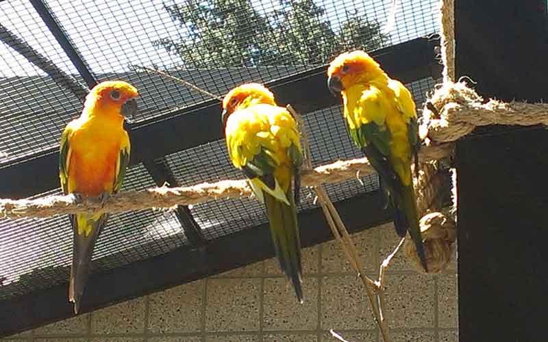 Voliere bau für Papageien