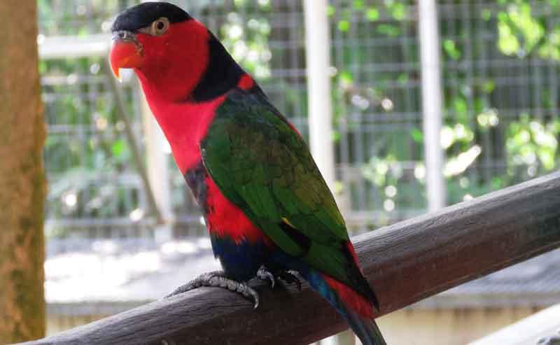 Papageien Volieren - Was muss beachtet werden?