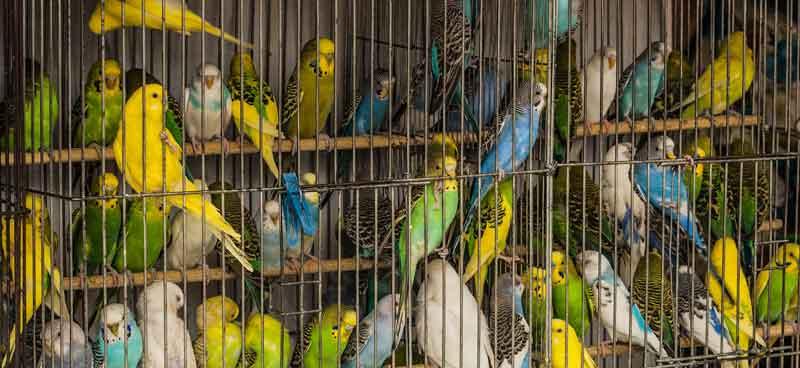 Papageien Volieren Platzmangel
